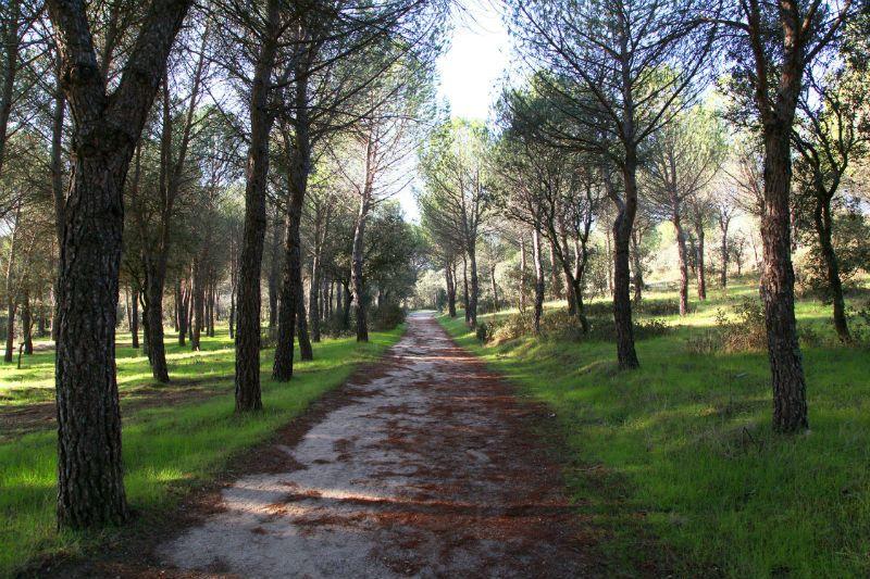 Excursión escolar a Pinar de Valdelatas, Madrid: Entorno bosque